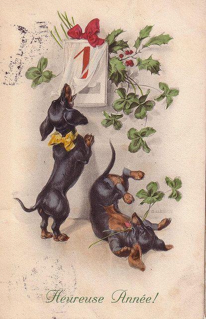 teckels heureuze annee 1913 by janwillemsen, via Flickr