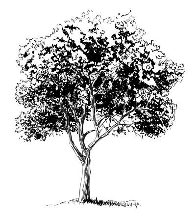 How to draw a tree step 5