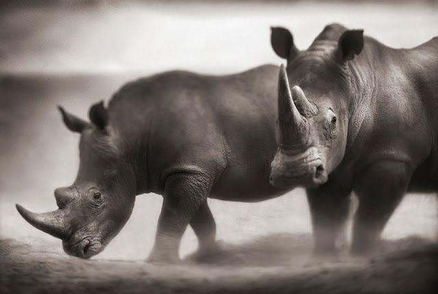 ALLPE Medio Ambiente Blog Medioambiente.org : África en blanco y negro