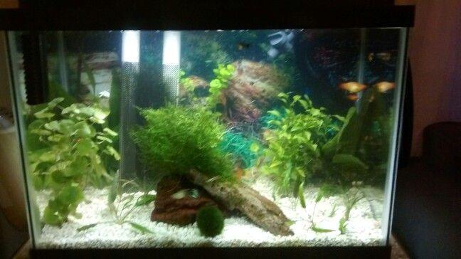 Best 25 20 Gallon Aquarium Ideas On Pinterest Fish Tank