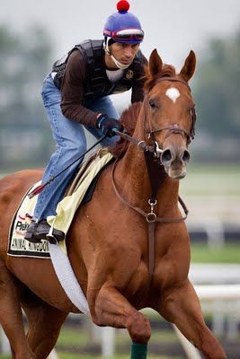 Et Voilà! The one and only Animal Kingdom - winner of the 2011 Kentucky Derby - and the namesake of a wonderfully dark and masterful Aussie drama!