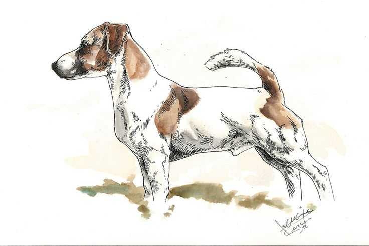 Jack Russell Dog Art | Jack russell terrier by bull-terrier on DeviantArt