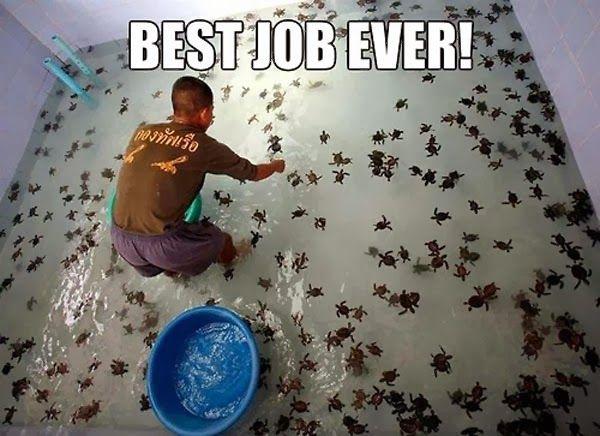 Oh my gosh the baby sea turtles are soooooooooooooo cuuuuuuuuuuuttttte!!!!!!!!!!!!!!!!!!!!!!!!!!!!!!!!!