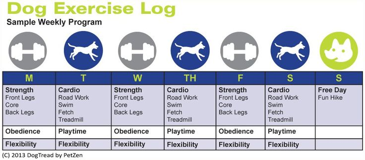 Dog Exercise Helps the Aging Process | DogTread