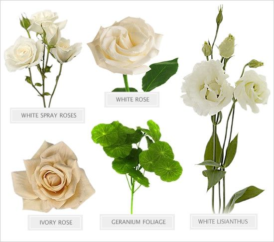 White Wedding Flowers Names And Pictures : Best flower recipe guides images on floral