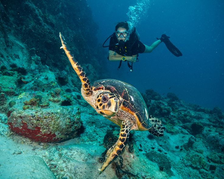 Discover what's special about Barbados diving...