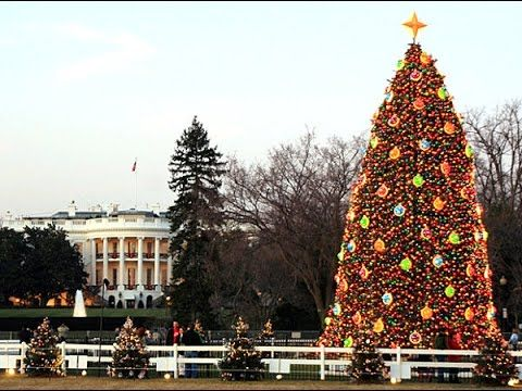Most Amazing Christmas Trees in the U.S.