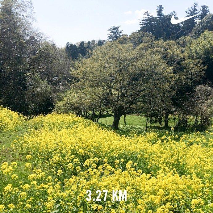 田んぼにもお水が!   ランニング日記(2017.04.13)   ランニング   走る薬剤師 大徳秀幸 公式ブログ