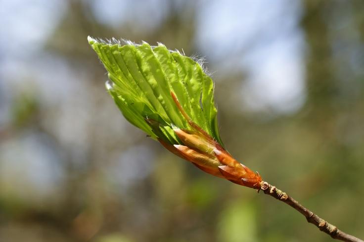 voorjaar in Doorn