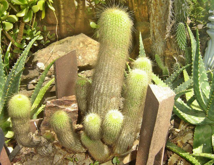 jardim rústico: Colors, Flowers, Cactus
