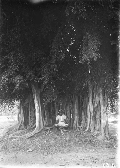 A Javanese man meditating under Banyan tree, Dutch East Indies, 1916
