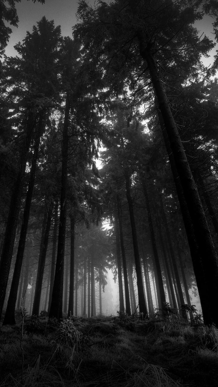 Pin By J Green Evans On Dark Forest Dark Wallpaper Beautiful Nature Wallpaper Black Wallpaper