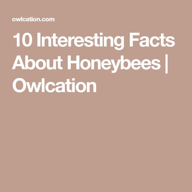 10 Interesting Facts About Honeybees | Owlcation
