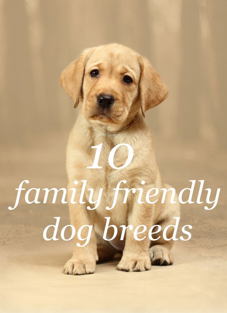 These are the top 10 family friendly dog breeds Family