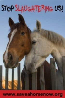 Every 5 minutes an American horse is inhumanely slaughtered for human consumption.