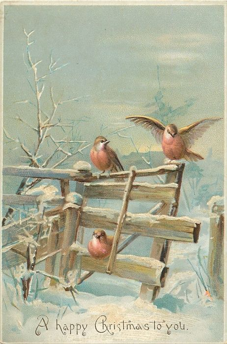 two robins sit on top rail one underneath on bottom rail