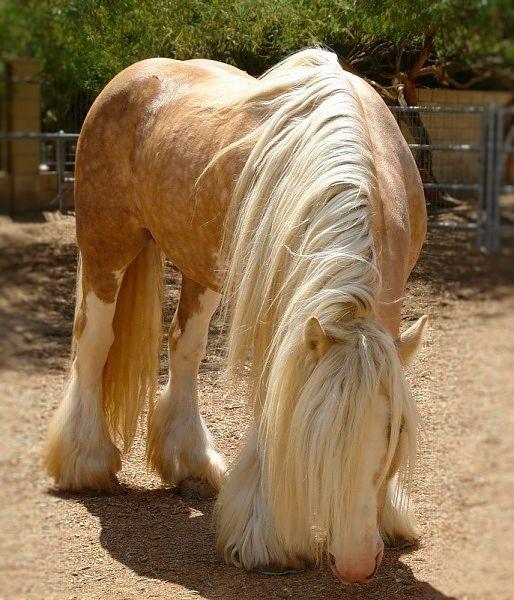 Kết quả hình ảnh cho horse hair