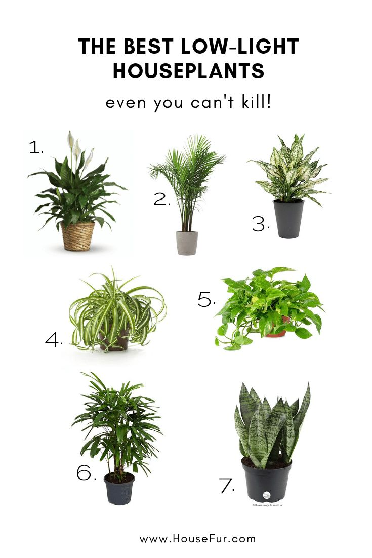 The Best Low Light Houseplants You Can T K*Ll Plants 400 x 300