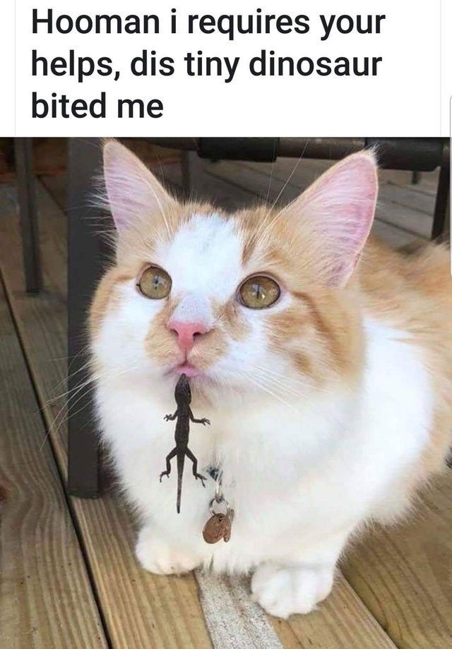 Healthy And Sizable Wholesome Animal Collection 44 Pics In 2021 Animal Memes Clean Funny Animal Memes Cat Memes Clean