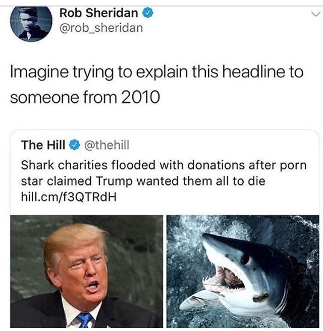 Shark charities flooded with donations after porn star claimed Trump wanted them all to die | memes