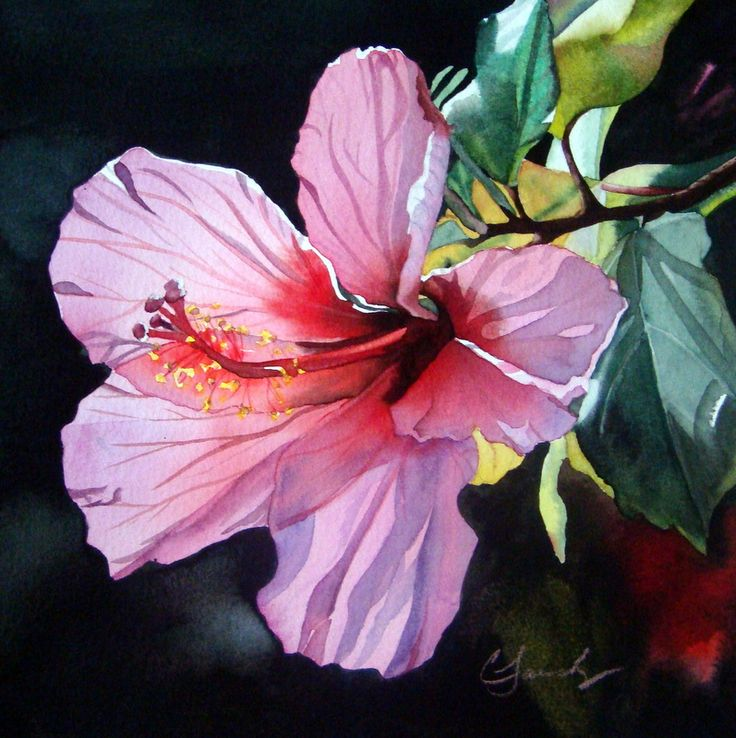 hibiscus+watercolor+paintings | pink back lit hibiscus original watercolor miniature painting by ...