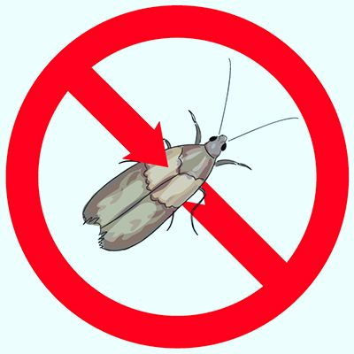 Pantry Moth Extermination - How to Identify and Eliminate Them - http://apolloxpestcontrol.com/pantry-moth-extermination-identify-eliminate/