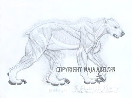 """The Flesh-naked Polar Bear"", read about it, if a shaman saw such a naked bear it meant he or someones death was near. After a while I dreamt about this halfnaked bear! Original for sale. Pencildrawing by Naja Abelsen. GREENLAND MYTHOLOGY - www.123hjemmeside.dk/NajaAbelsen"