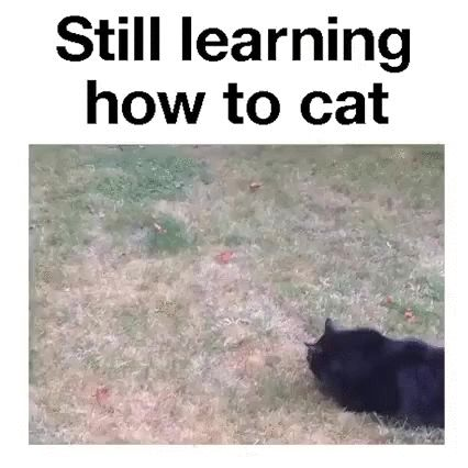 learning how to cat lol GIF – Lisa Steffen