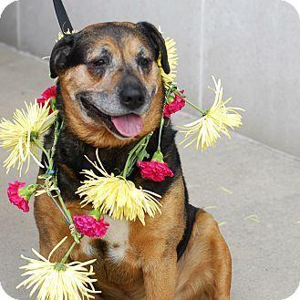 Detroit, MI - Rottweiler Mix. Meet Dug, a dog for adoption. http://www.adoptapet.com/pet/12239954-detroit-michigan-rottweiler-mix