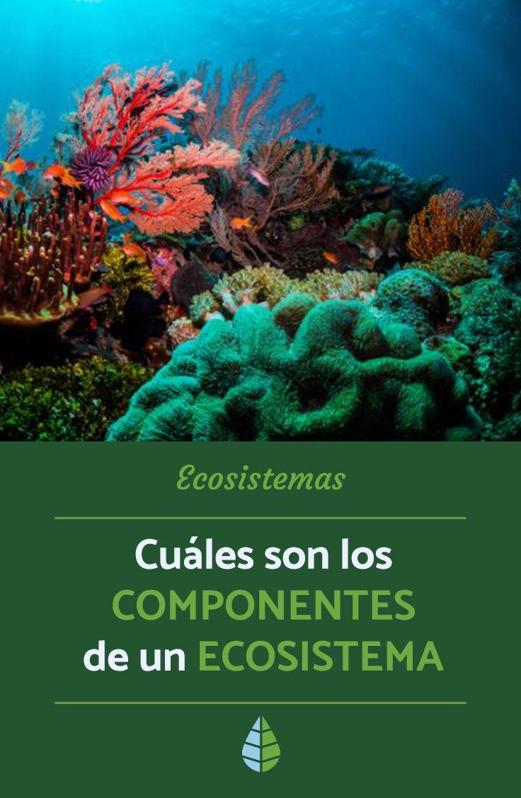 Cuáles Son Los Componentes De Un Ecosistema Ecosistemas Tipos De Ecosistemas Ecosistema Y Sus Componentes