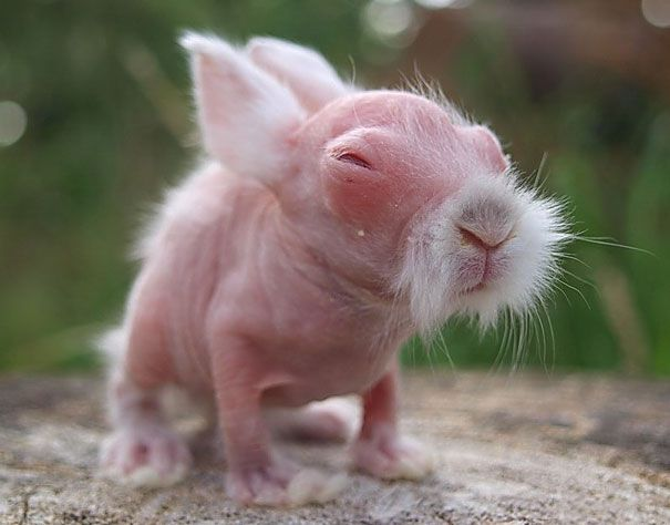 This baby rabbit was born without hair. Good news for him, 3 months later he was a fluffy little bunny!