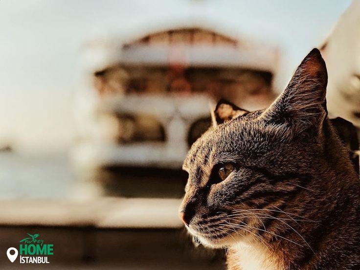 Моє вам щире «мяу» зі Стамбула!  #Caturday Фото: iamuguraslan / IG