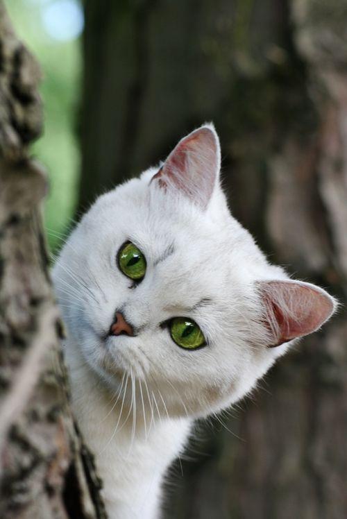 kitten / Kittens