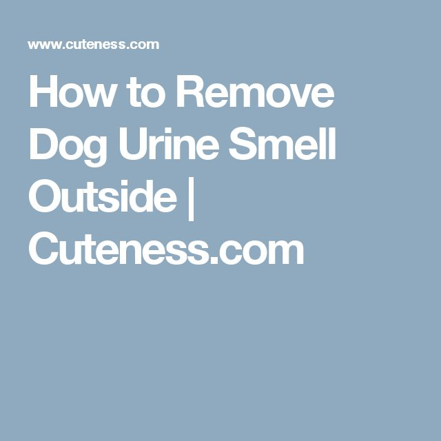 how to stop dog urine burning grass