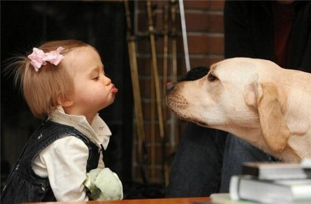 .: Little Girls, Photo Kids, A Kiss, Dogs, Pet, Pucker Up, Funny Photo, Baby, Animal