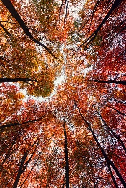 B-e-a-utiful!: Fall Pics, Nature Beauty, Fall Leaves, Autumn Leaves, Fall Trees, Favorit Seasons, Autumn Trees, Photo, Fall Color