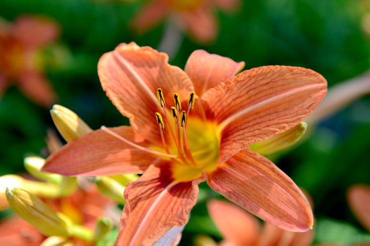 In Full Bloom by BourgeoisPhoto on Etsy, $10.00