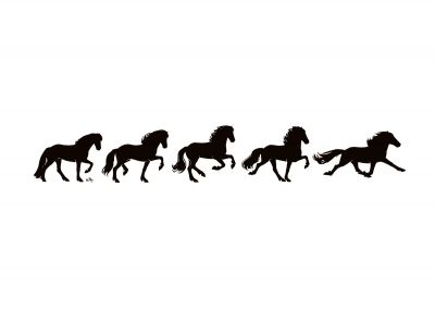 Wall sticker -Icelandic Horse The different gaits of the Icelandic horse. The Icelandic horse has five different gaits: Pace, walk, tolt, run and canter.