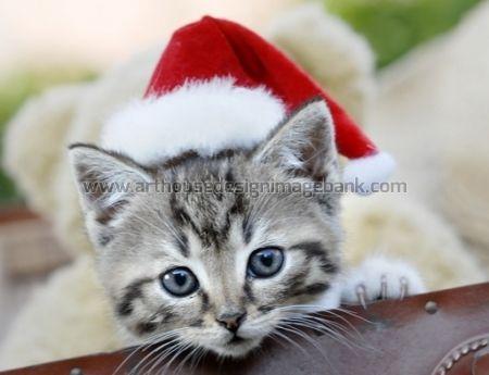 X-mas kitten images for licensing. pet images for publishing, www.arthousedesignimagebank.com