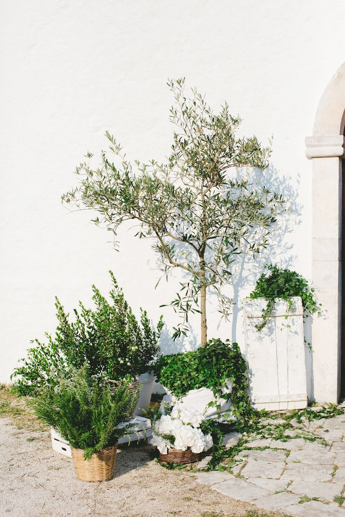 Amsicora - Addobbo chiesa con piante ulivo e fiori di campo - wedding church for natural chic wedding decor