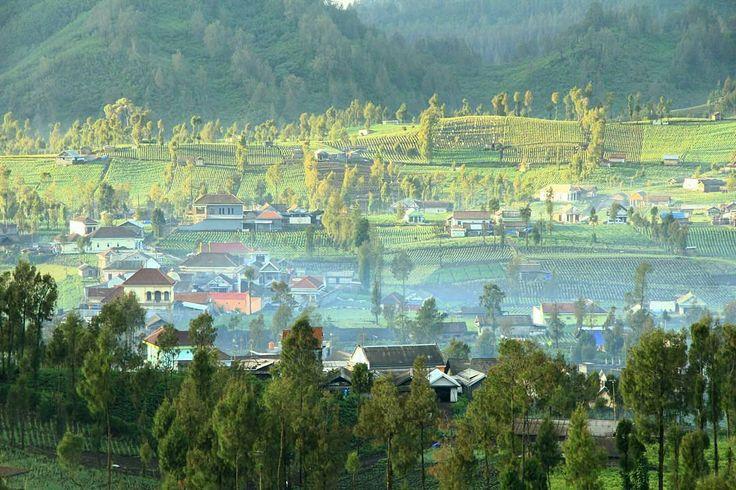 From @kuacikecil Good Morning from Ranu Pani Village  . follow us @Thisiseastjava . . Yuk baca informasi Malang & Sekitarnya di http://ift.tt/2tNuWXD . Ingin #Foto Cerita #Petualangan dan Artikelmu kami publish di official Website dan @Instagram? . Tulisan Minimal 3 Paragraf (300 kata) . . Kirim ke: lingkarmalangofficial@gmail.com . Selalu gunakan hashtag #lingkarmalang to share your #pictures . #Thisismalang #Thisiseastjava #KotaMalang #KabupatenMalang #KotaBatu