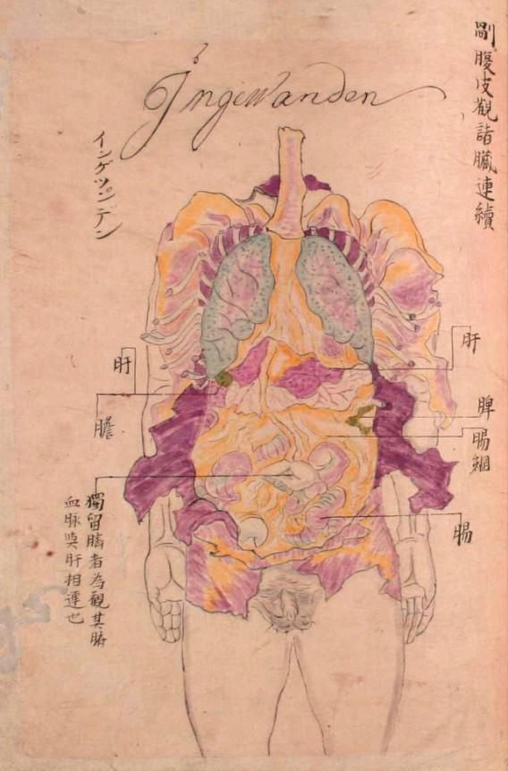 """S@KANOUE 在 Twitter:""""画像収集癖 1800年頃 人体解剖図 http://t.co/UcWW14Imij"""""""
