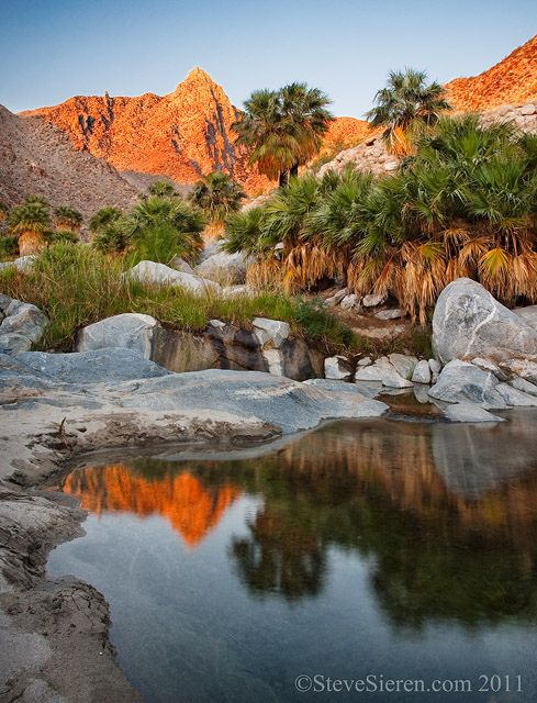 Sonorain Desert Oasis, Baja California  Reminds me always of the oasis where Mozes stayed with his people before they entered the promised land so many years later.