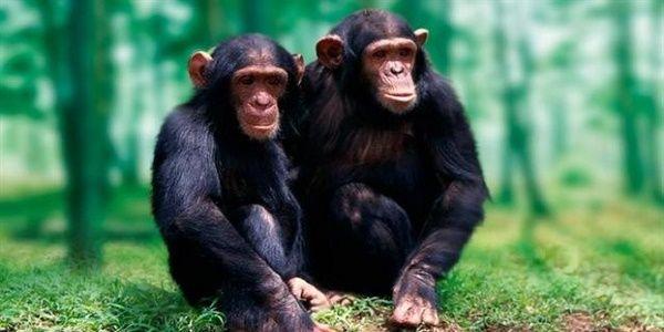 Οι πίθηκοι μπορούν να διαβάσουν το μυαλό των άλλων