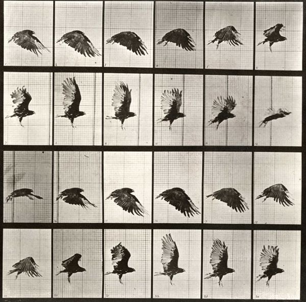 MUYBRIDGE: estudios sobre el movimiento en su obra «THE ATTITUDES OF ANIMALS IN MOTION» (1881)