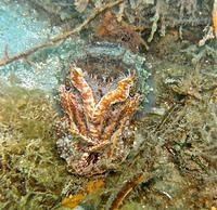 Cuttlefish most viewed on our site