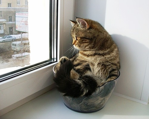 17 Best images about Cats in Pots on Pinterest