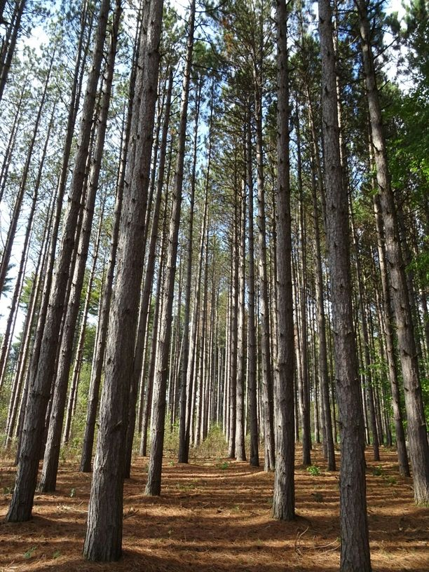 Oak Openings Preserve Metropark Lucas County Ohio By Throwingsofas Lucas County Ohio Day Trips
