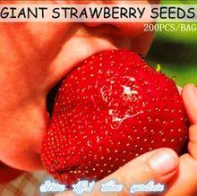 Fruit seeds 200pcs Super Giant Strawberry perfume bonsai strawberry fruit, home gardening DIY