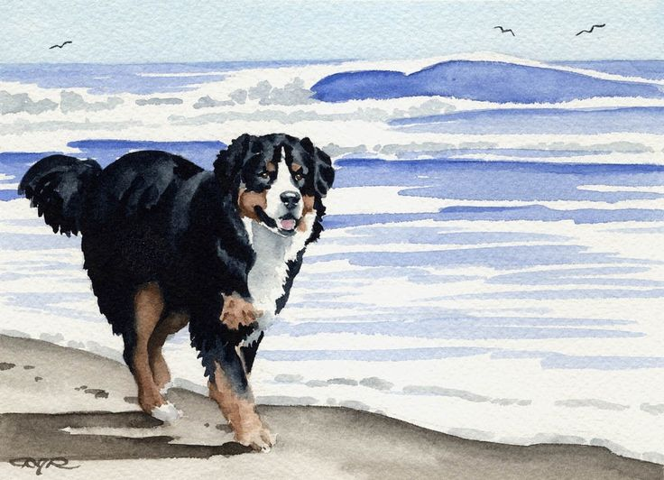 BERNESE MOUNTAIN DOG Art Print Signed by Artist D by k9artgallery   WATERCOLOR